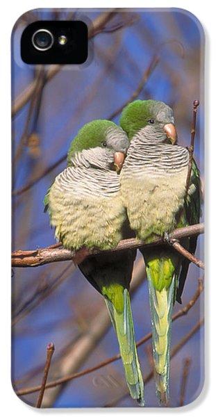 Monk Parakeets IPhone 5s Case by Paul J. Fusco