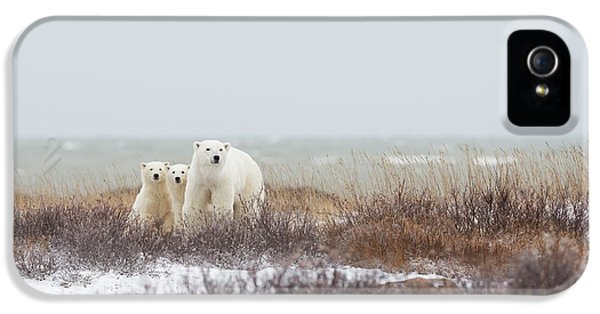 Polar Bear iPhone 5s Case - Mother & Cubs At The Seaside by Marco Pozzi