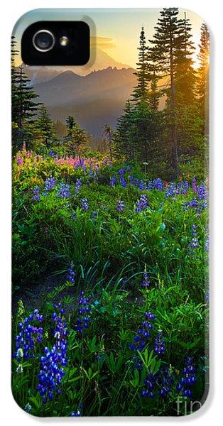 Mountain iPhone 5s Case - Mount Rainier Sunburst by Inge Johnsson