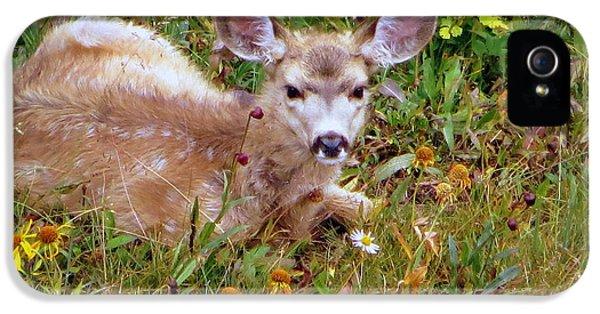 Mule Deer Fawn IPhone 5s Case by Karen Shackles