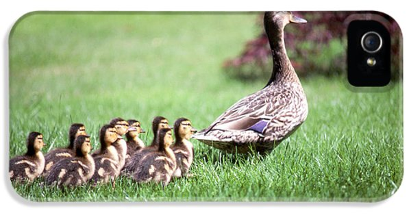 Duck iPhone 5s Case - Mumma Duck And Kids by King Wu
