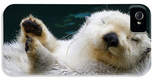 Napping On The Water IPhone 5s Case