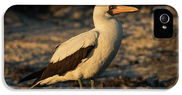 Nazca Booby (sula Granti IPhone 5s Case by Pete Oxford