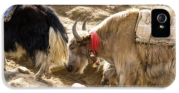 Nepal Yak Move Along The Everest Base IPhone 5s Case