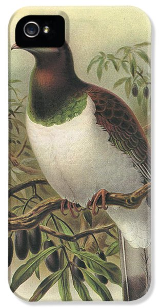 New Zealand Pigeon IPhone 5s Case by Rob Dreyer