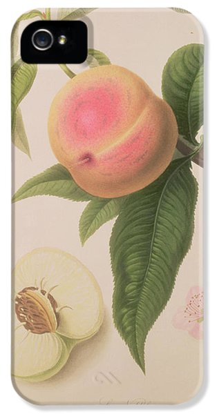 Noblesse Peach IPhone 5s Case