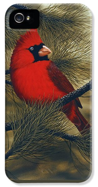 Northern Cardinal IPhone 5s Case by Rick Bainbridge