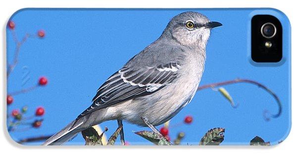 Northern Mockingbird IPhone 5s Case by Paul J. Fusco
