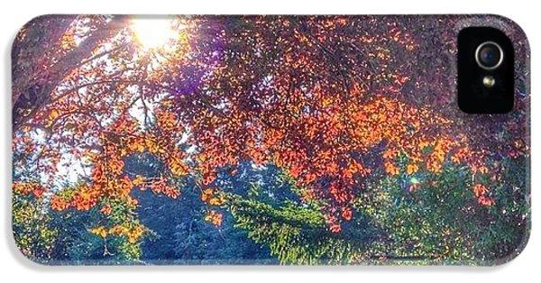 Sunny iPhone 5s Case - Oak Street Early Evening Light by Anna Porter