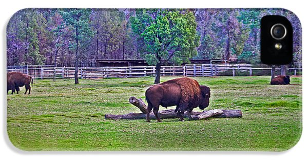 One Bison Family IPhone 5s Case by Miroslava Jurcik
