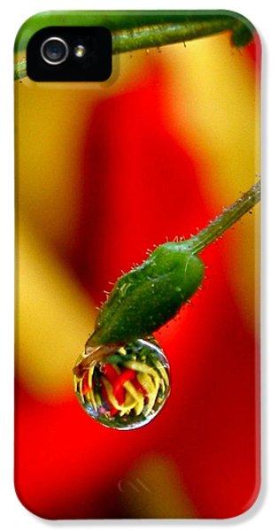 One Raindrop IPhone 5s Case