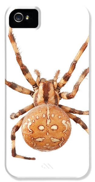 Orb Web Spider IPhone 5s Case