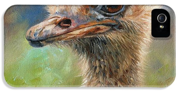 Ostrich iPhone 5s Case - Ostrich by David Stribbling