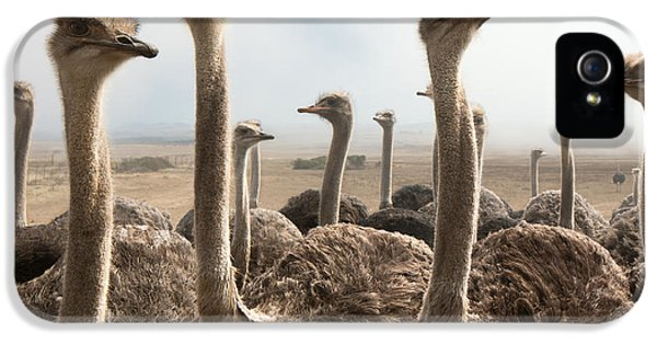 Ostrich iPhone 5s Case - Ostrich Heads by Johan Swanepoel