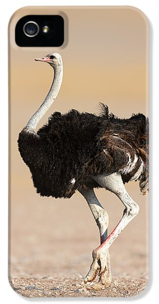 Ostrich IPhone 5s Case by Johan Swanepoel