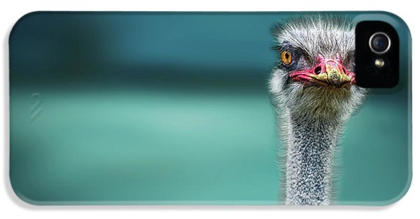Ostrich Protecting Two Poor Chicken From The Wind IPhone 5s Case