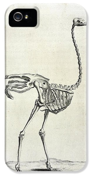 Ostrich iPhone 5s Case - Ostrich Skeleton by British Library