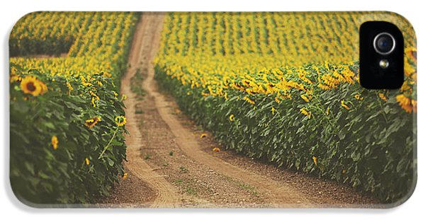 Sunflower iPhone 5s Case - Oz by Carrie Ann Grippo-Pike