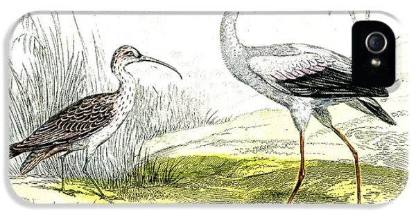 Painted Storks IPhone 5s Case by Collection Abecasis