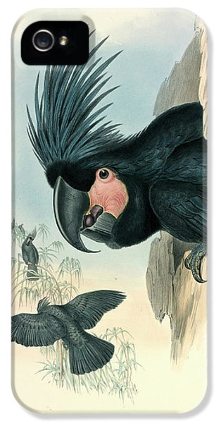 Cockatoo iPhone 5s Case - Palm Cockatoo by Natural History Museum, London