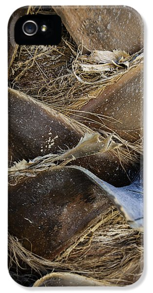 Pattern iPhone 5s Case - Palm Tree Bark by Sebastian Musial