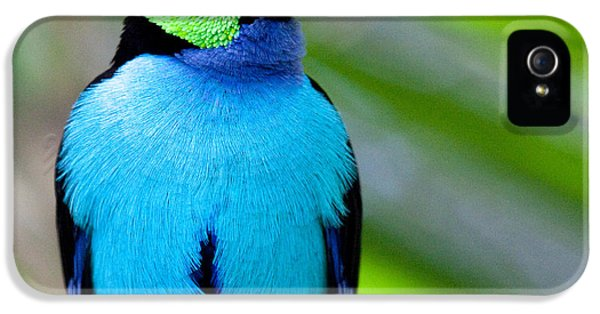 Paradise Tanager IPhone 5s Case by Nathan Rupert