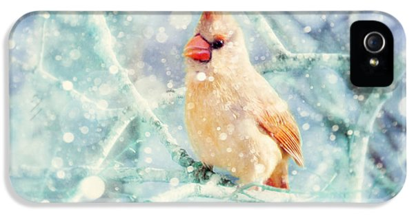 Peaches In The Snow IPhone 5s Case by Amy Tyler