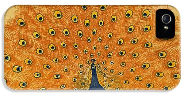Peacock IPhone 5s Case by English School