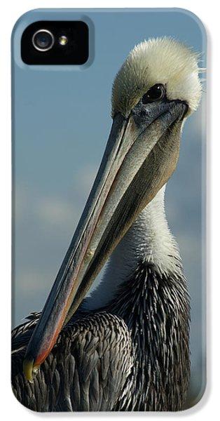 Pelican Profile IPhone 5s Case by Ernie Echols