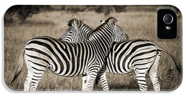 Perfect Zebras IPhone 5s Case by Delphimages Photo Creations