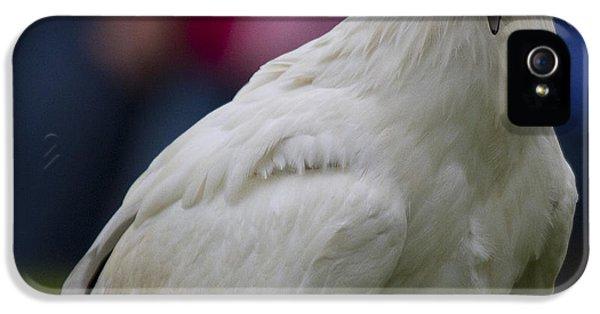 Pharaos Chicken 2 IPhone 5s Case by Heiko Koehrer-Wagner