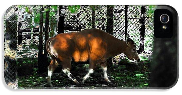 Phenomena Of Banteng Walk IPhone 5s Case by Miroslava Jurcik