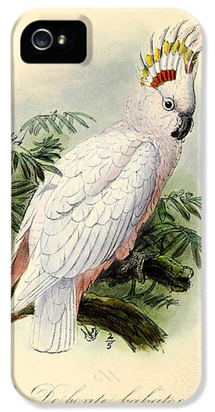 Cockatoo iPhone 5s Case - Pied Cockatoo by Dreyer Wildlife Print Collections
