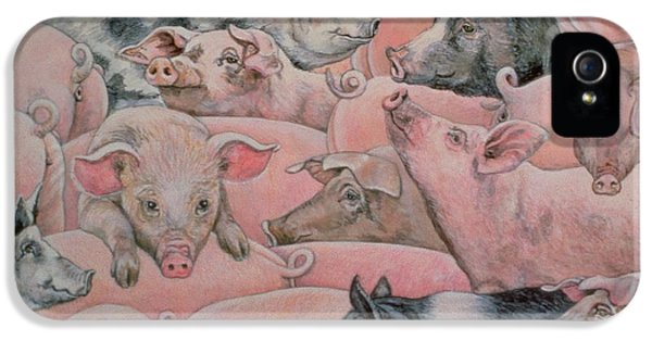 Pig Spread IPhone 5s Case by Ditz