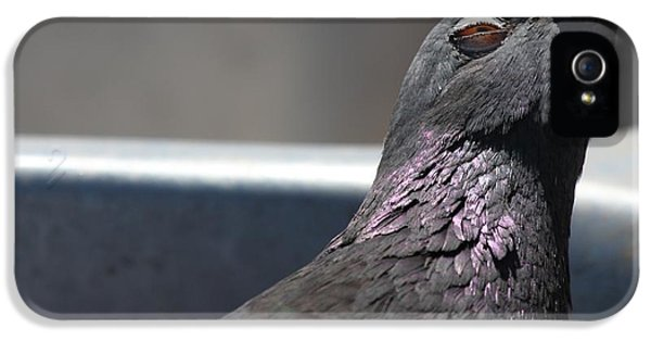 IPhone 5s Case featuring the photograph Pigeon In Ecstasy  by Nathan Rupert