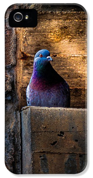 Pigeon Of The City IPhone 5s Case