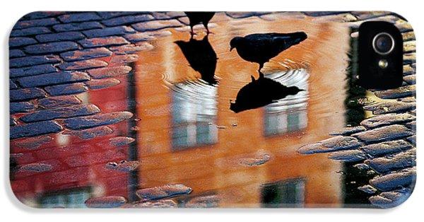 Pigeons IPhone 5s Case