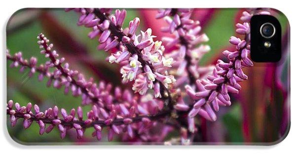 Far North Queensland iPhone 5s Case - Pink And Cream Cluster Bloom by Kerryn Madsen-Pietsch