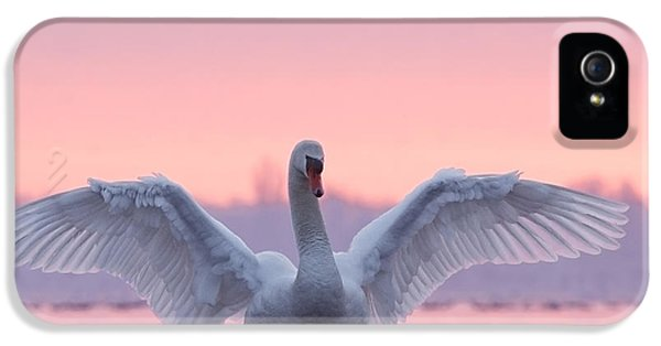Swan iPhone 5s Case - Pink Swan by Roeselien Raimond