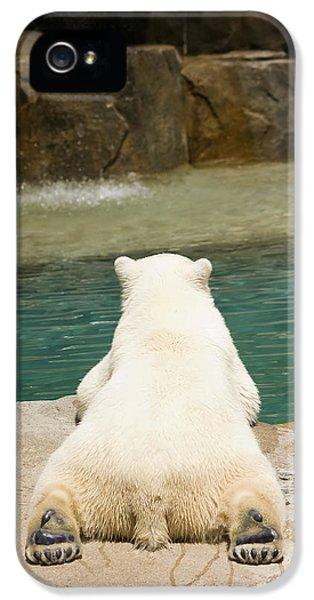 Playful Polar Bear IPhone 5s Case by Adam Romanowicz