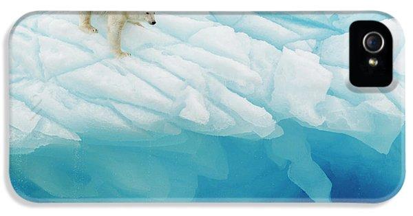 Polar Bear iPhone 5s Case - Polar Bear by Joan Gil Raga