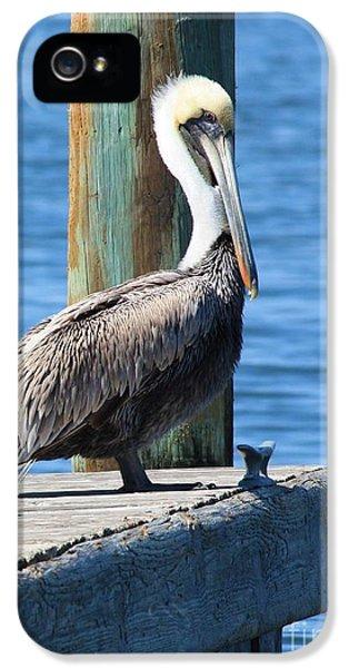 Pelican iPhone 5s Case - Posing Pelican by Carol Groenen
