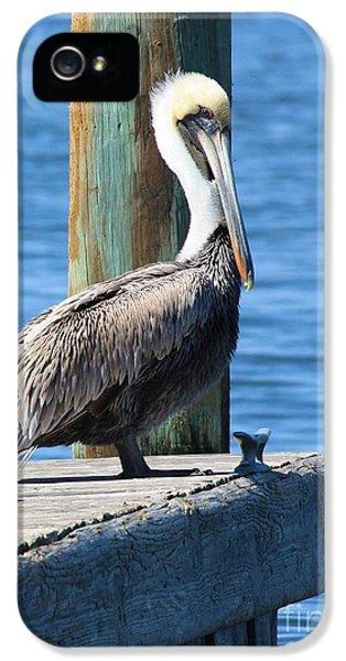 Posing Pelican IPhone 5s Case