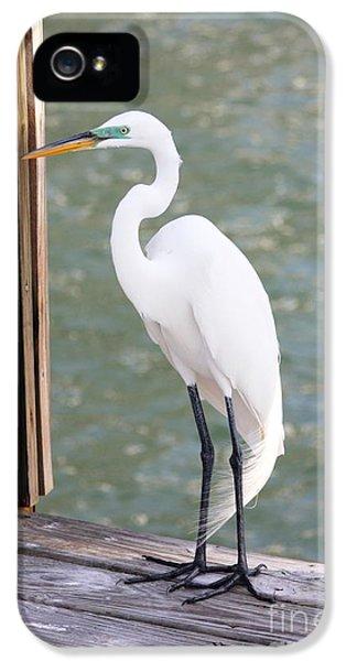 Pretty Great Egret IPhone 5s Case