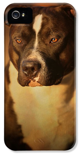 Bull iPhone 5s Case - Proud Pit Bull by Larry Marshall