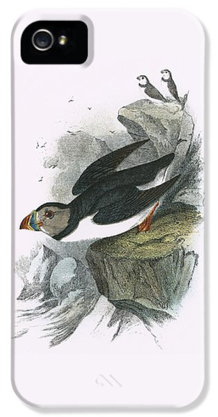 Puffin IPhone 5s Case by English School