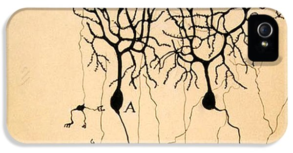 Pigeon iPhone 5s Case - Purkinje Cells By Cajal 1899 by Science Source