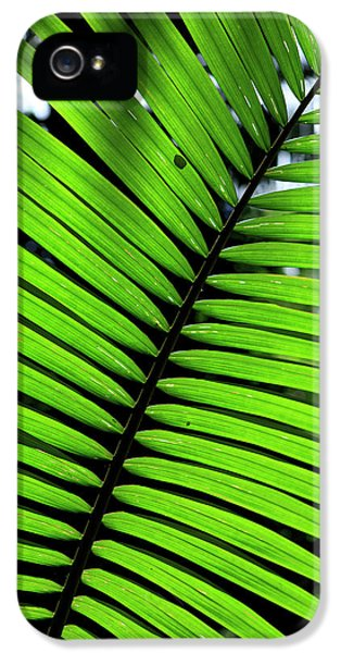 Far North Queensland iPhone 5s Case - Rainforest Leaves Form Abstract by Paul Dymond
