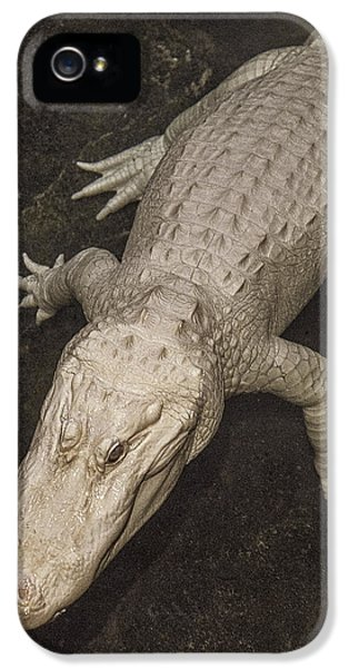 Rare White Alligator IPhone 5s Case