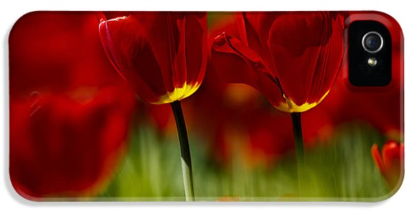 Tulip iPhone 5s Case - Red And Yellow Tulips by Nailia Schwarz